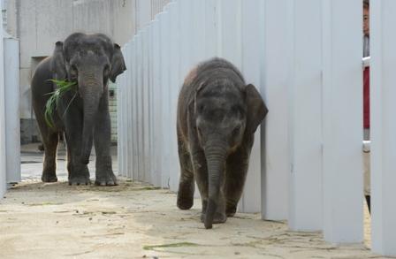 公開講座「さくら誕生から新ゾウ舎移動の記録」を開催しました