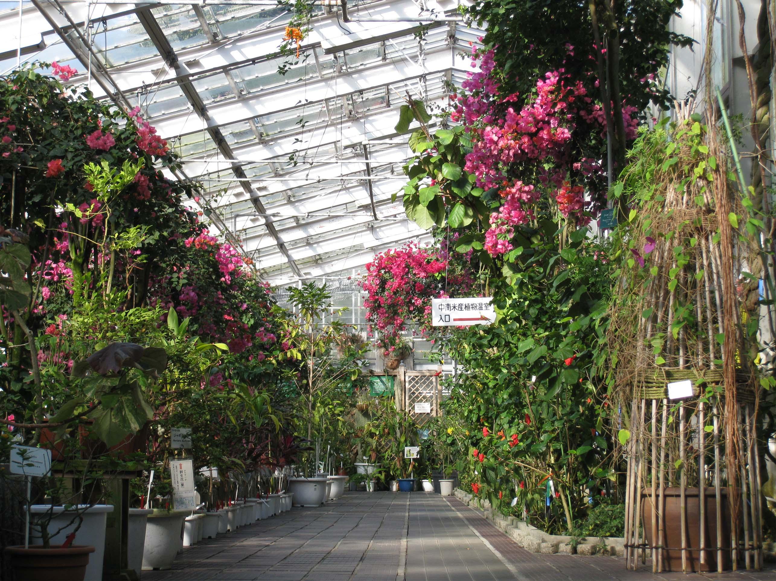 東山動植物園公開講座「熱帯植物の魅力」を開催します