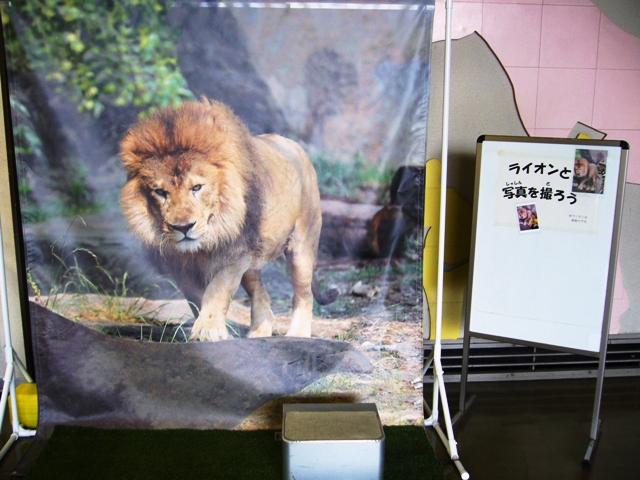 実物大のライオンを背景に記念撮影をしませんか?