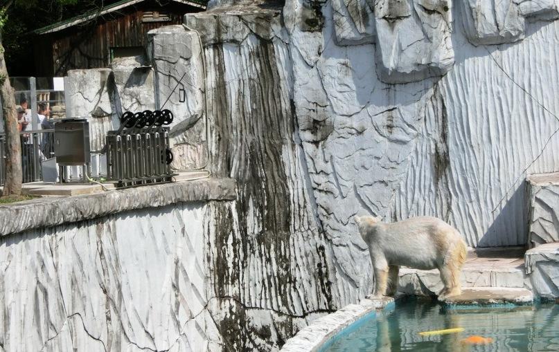 動物園サポーター オランウータンの綱渡りデッキ設置にご協力ください