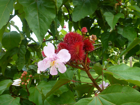 東山動植物園公開講座「インドネシアで花遊び」を開催します
