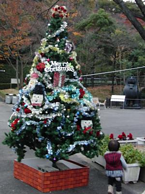クリスマスツリー登場。。。