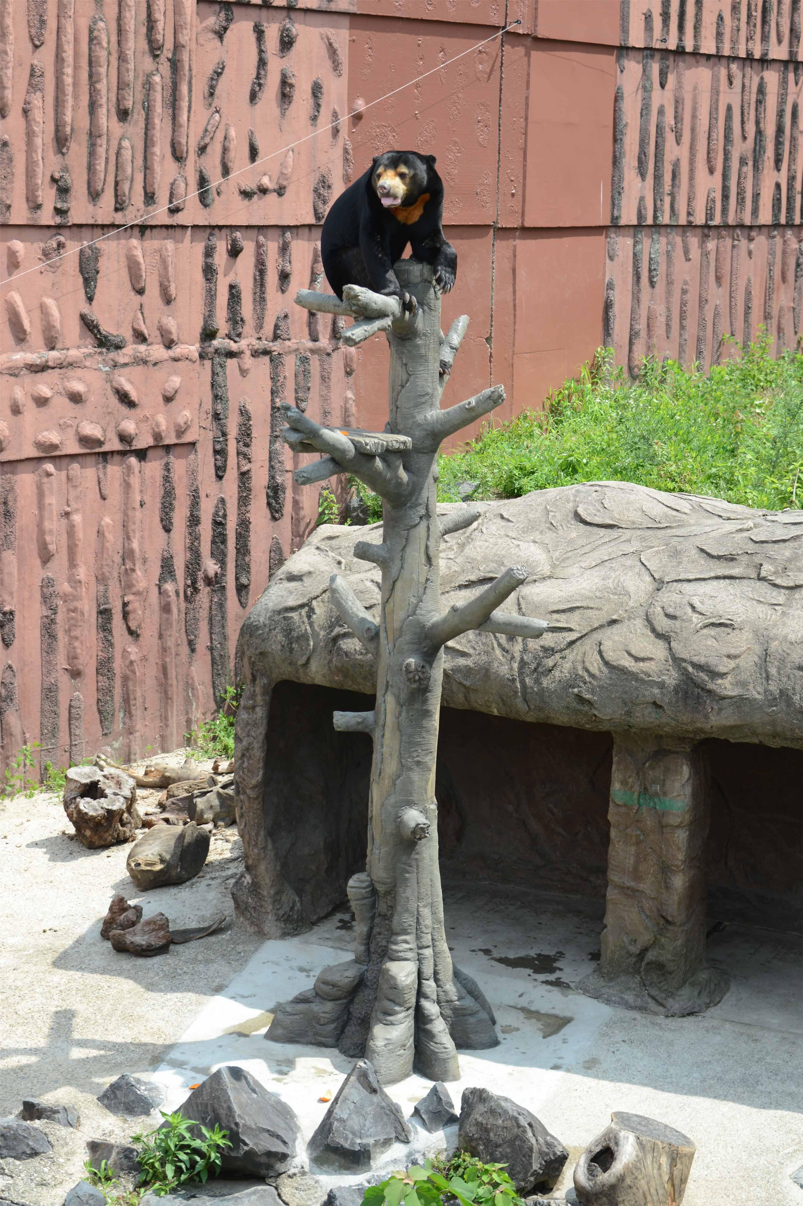 「マレーグマの登り木」の贈呈式を行いました