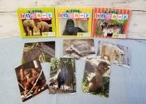 東山動植物園の動物カード 1・2・3