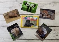 東山動植物園の動物カード<br />アフリカの動物