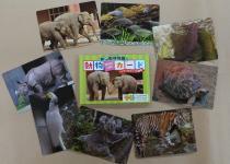 東山動植物園の動物カード<br />アジア・オセアニアの動物