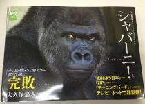 東山動植物園オフィシャルゴリラ写真集シャバーニ!