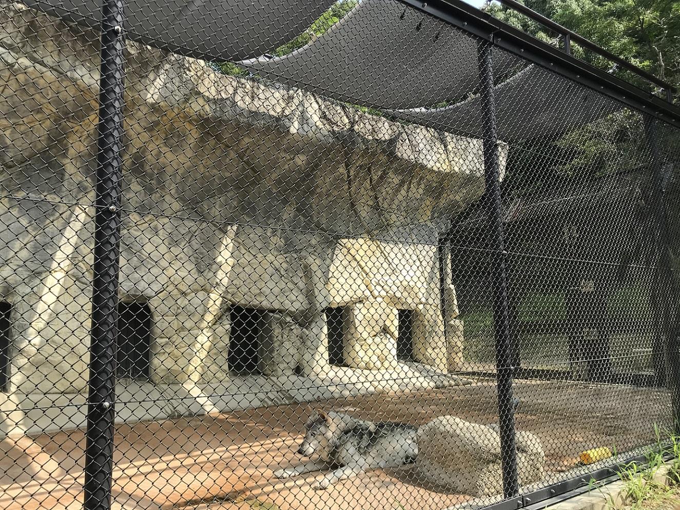 シンリンオオカミの日よけ(令和2年8月設置)