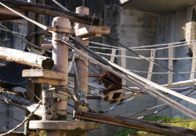 オランウータンの吊り橋<br />(平成23年11月設置)