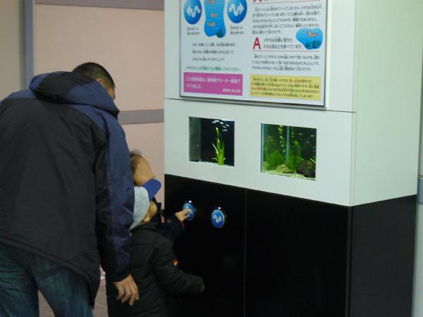メダカの水流実験装置<br />(平成21年3月設置)
